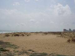Foto: dunas en la playa de Elche