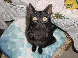 Foto: Cat Isis