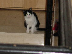 Foto: Cat Tapsie