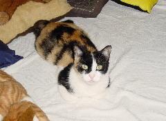 Foto: Cat Kleopatra